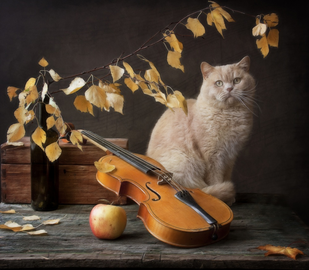 A piece of fine art art photography titled Autumn Melody for  Сat  and Violin by Eleonora Grigorjeva