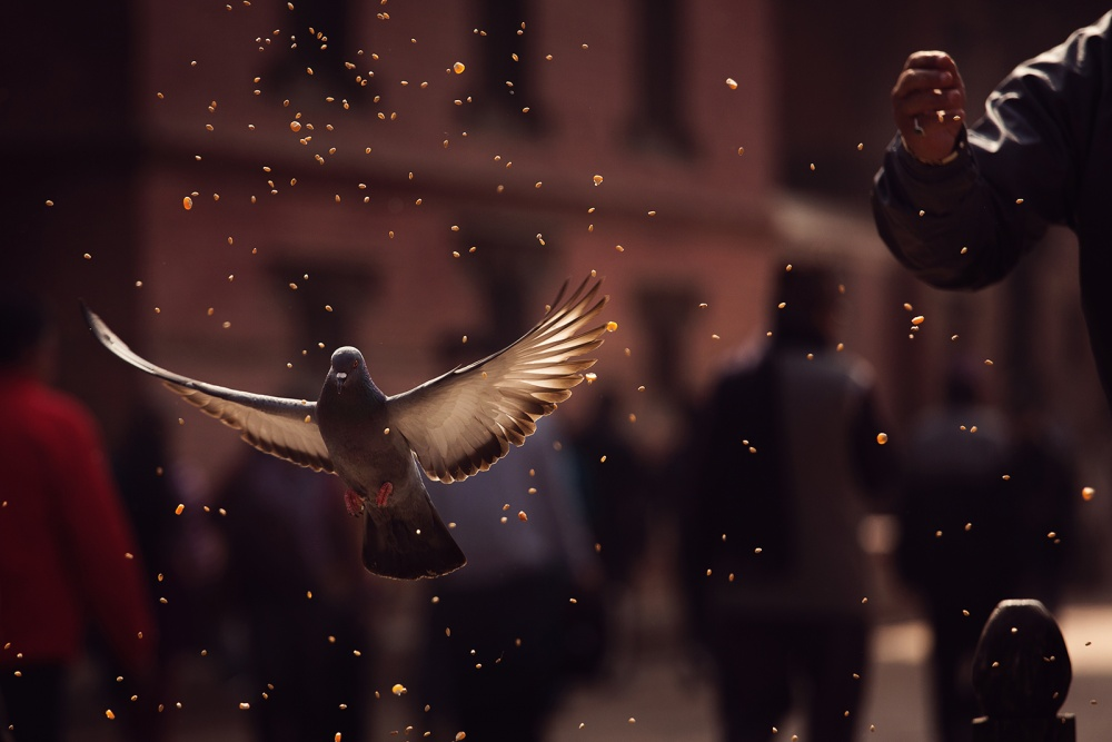 A piece of fine art art photography titled Pigeons In Patan Square, Kathmandu-Nepal by Dan Mirica