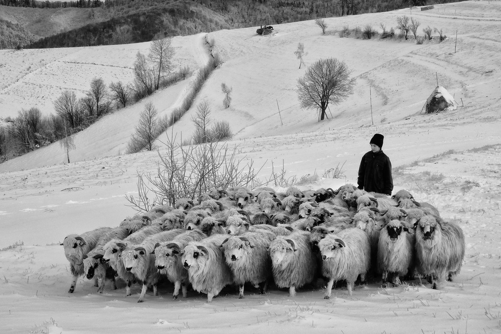 A piece of fine art art photography titled Shepherd of Holbav by Andrei Nicolas - The Traveler