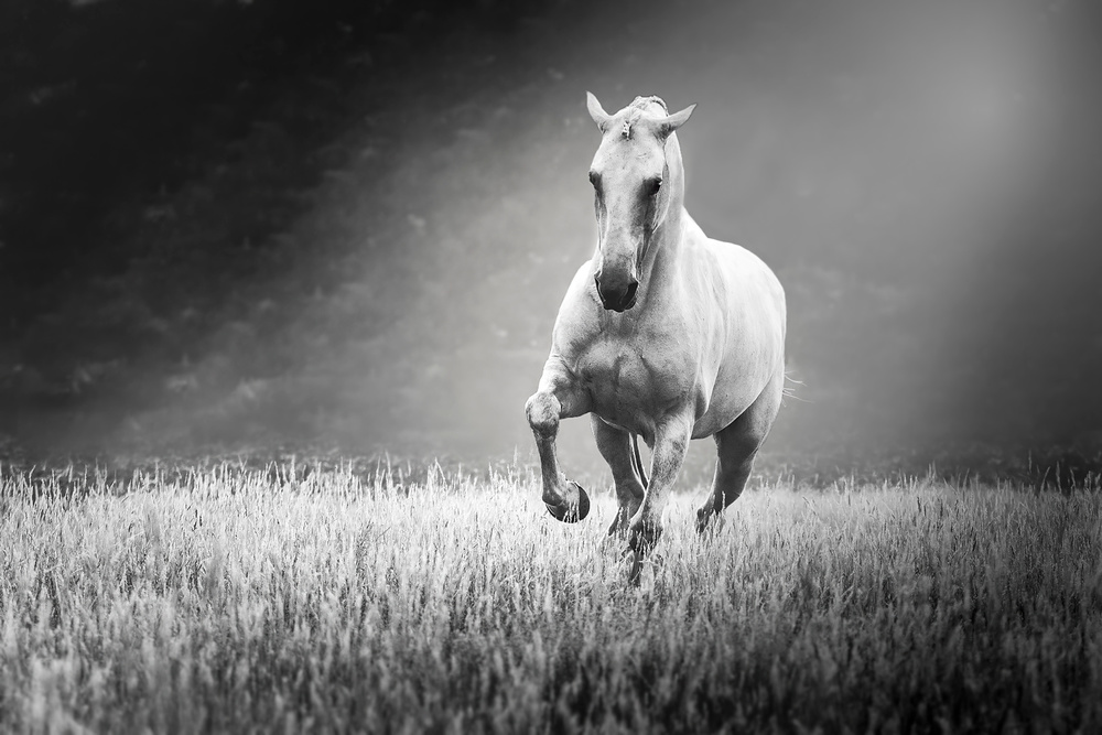 A piece of fine art art photography titled Horsepower In Spotlight by Ans Roels