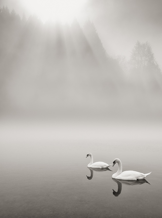 A piece of fine art art photography titled Swimming In the Fog Morning by Stano Strateny