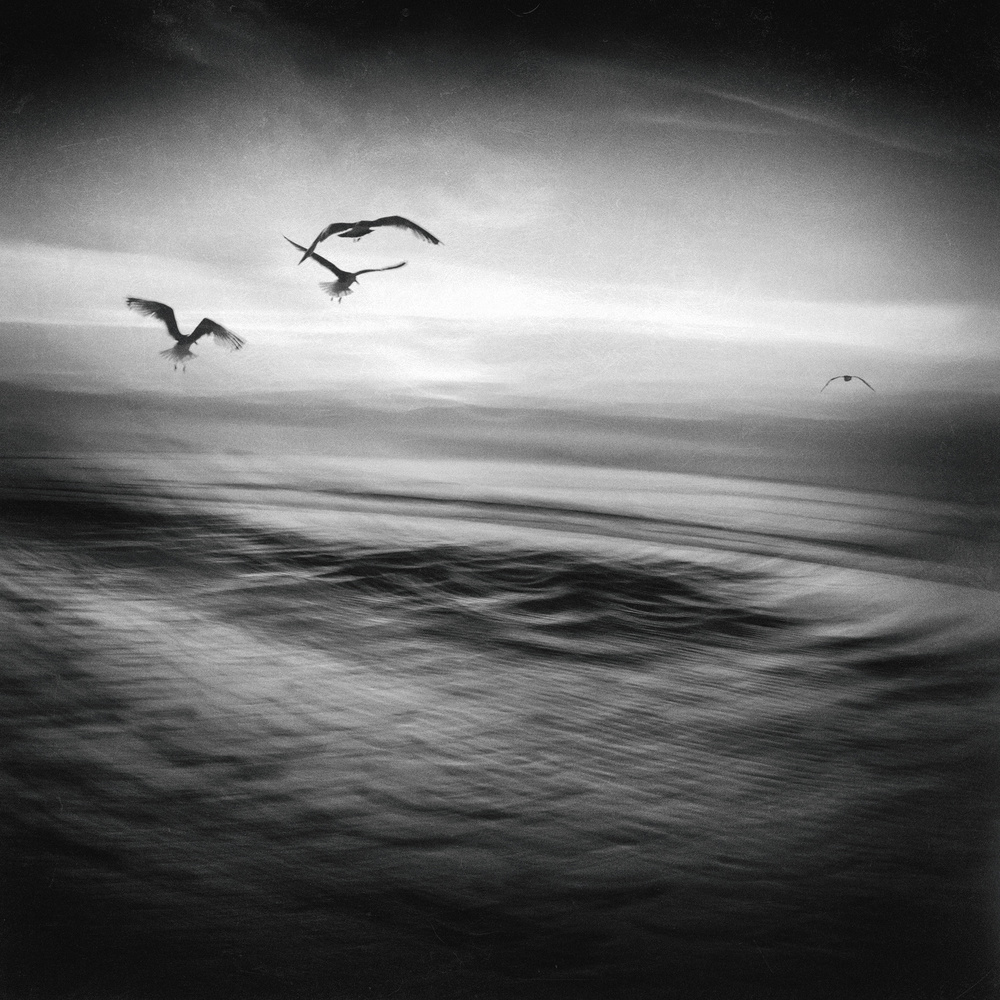 A piece of fine art art photography titled Seagull by Jacqueline van Bijnen