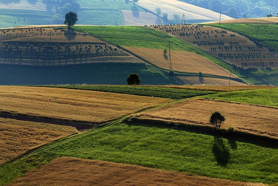 A piece of fine art art photography titled  Harvest Field by Janusz Wanczyk