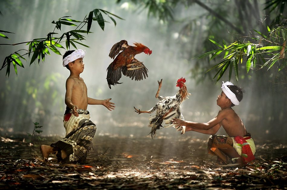 A piece of fine art art photography titled Cockfight by Ario Wibisono