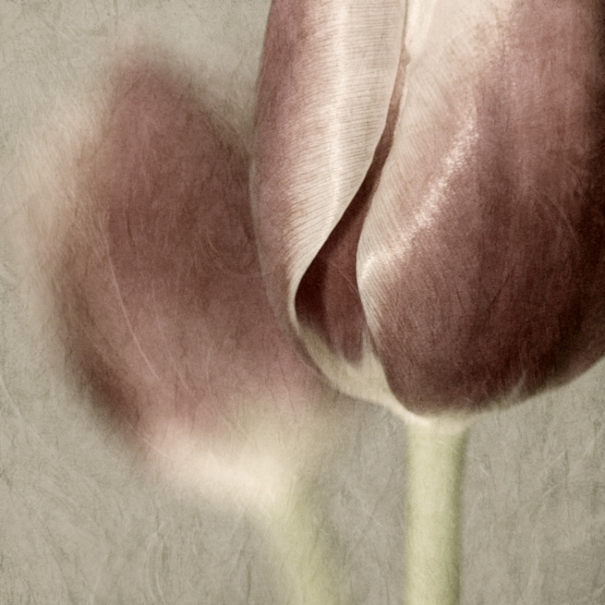 A piece of fine art art photography titled ~ Gentle Touch ~ by Schnette