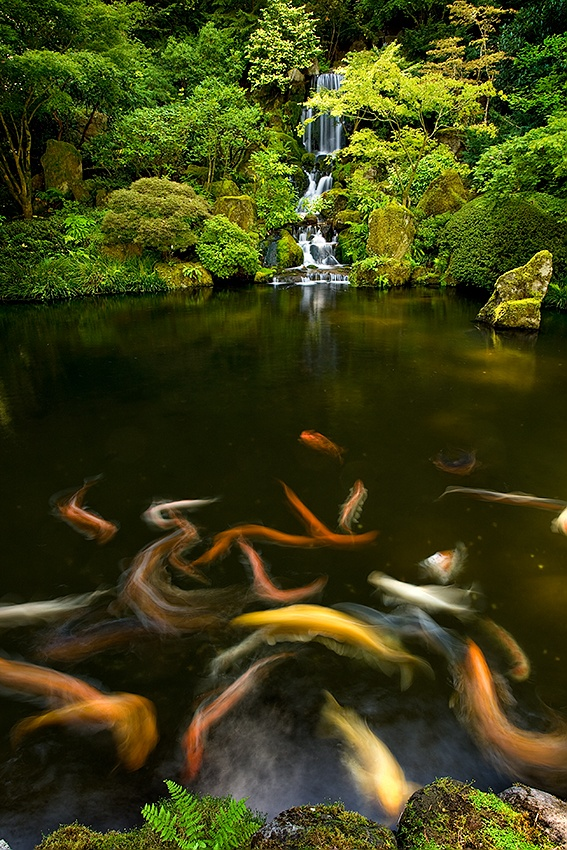 A piece of fine art art photography titled Koi Frenzy by JustinLee