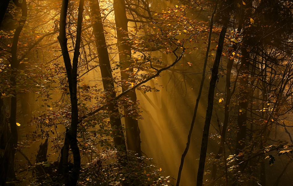 A piece of fine art art photography titled Morning Rays by Norbert Maier