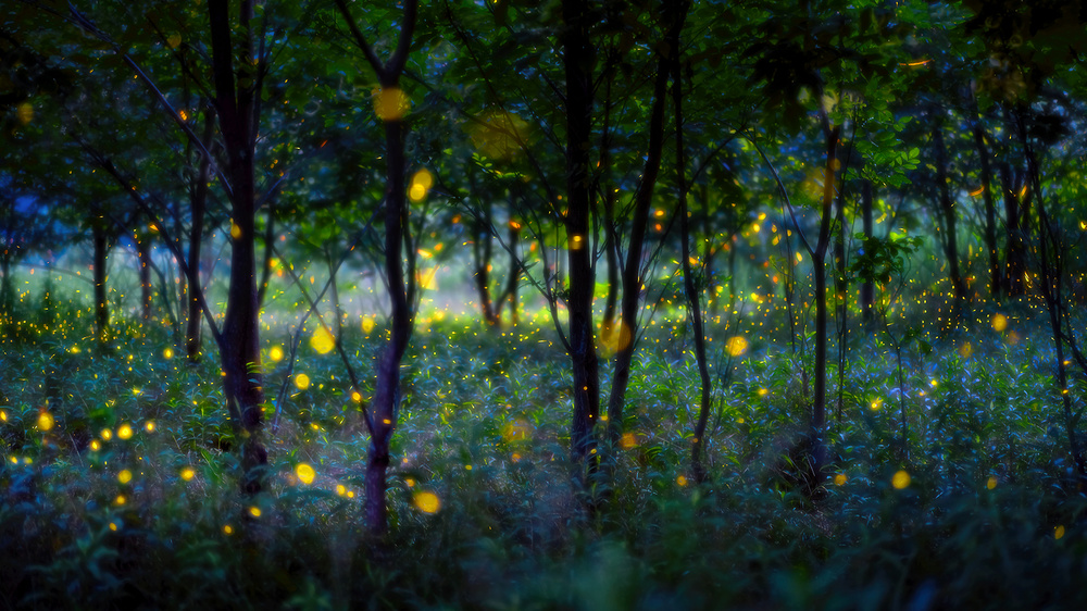 A piece of fine art art photography titled Magic Fireflies by Hua Zhu