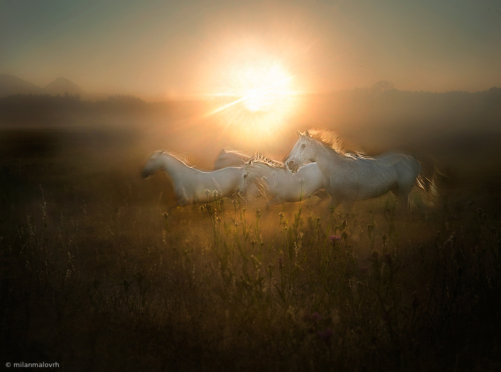 View this piece of fine art photography titled morning dance by milan malovrh