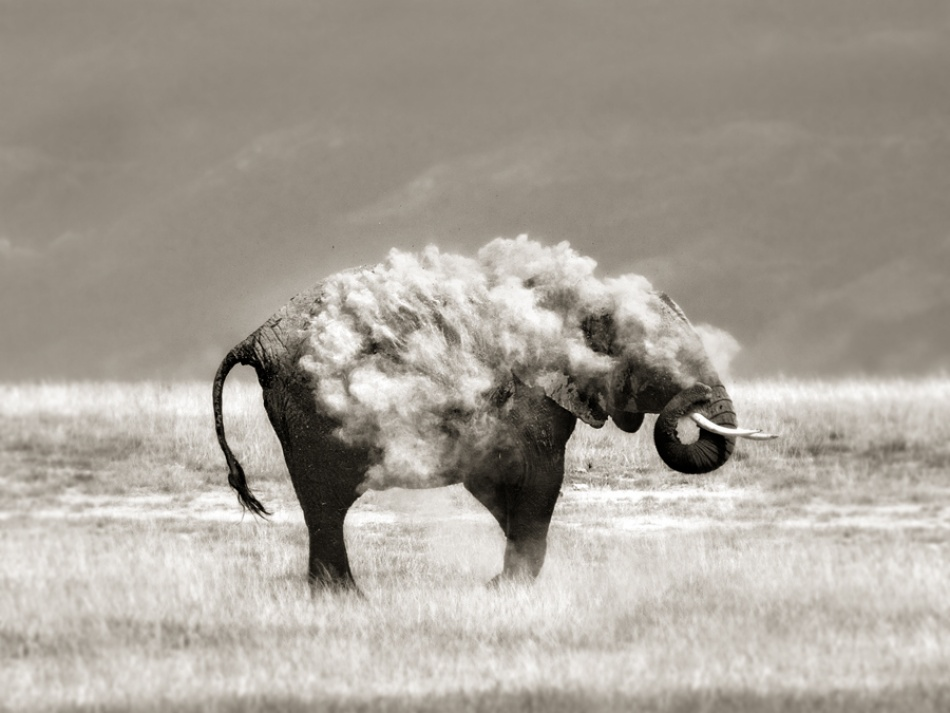A piece of fine art art photography titled An Elephant In Sheep\'s Clothing by Marina Cano