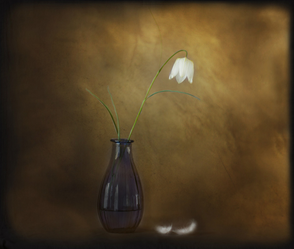 View this piece of fine art photography titled white fritillary by Lotte Grønkjær