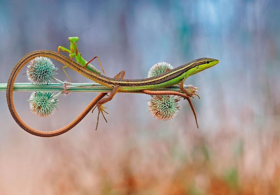 A piece of fine art art photography titled My Vehicle Lizard by Made Saputra