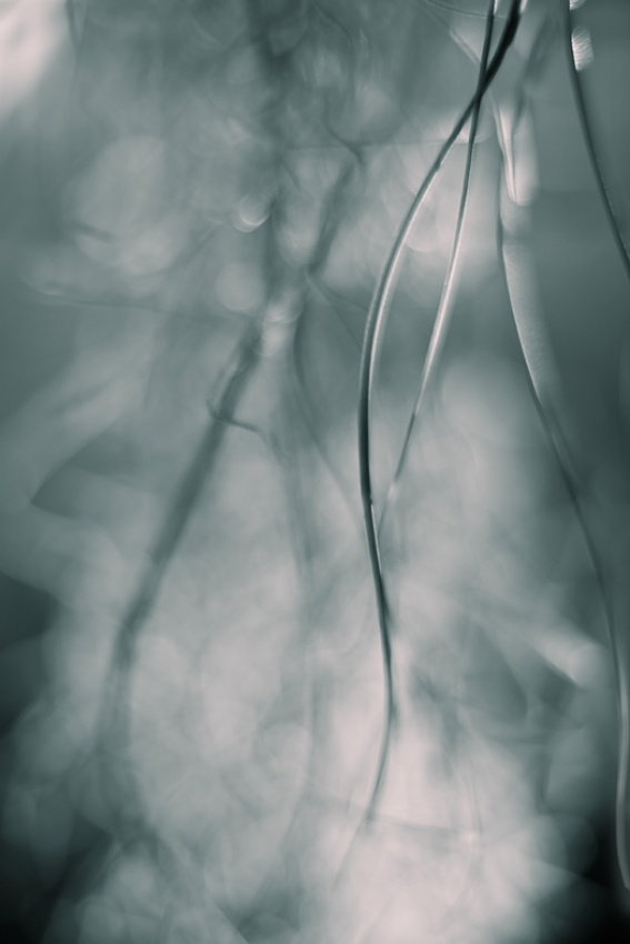 A piece of fine art art photography titled Tillandsias by Mel Brackstone