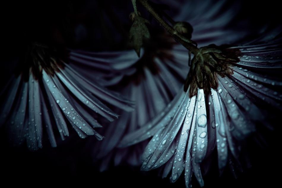 A piece of fine art art photography titled Ballet by Deborah Fort