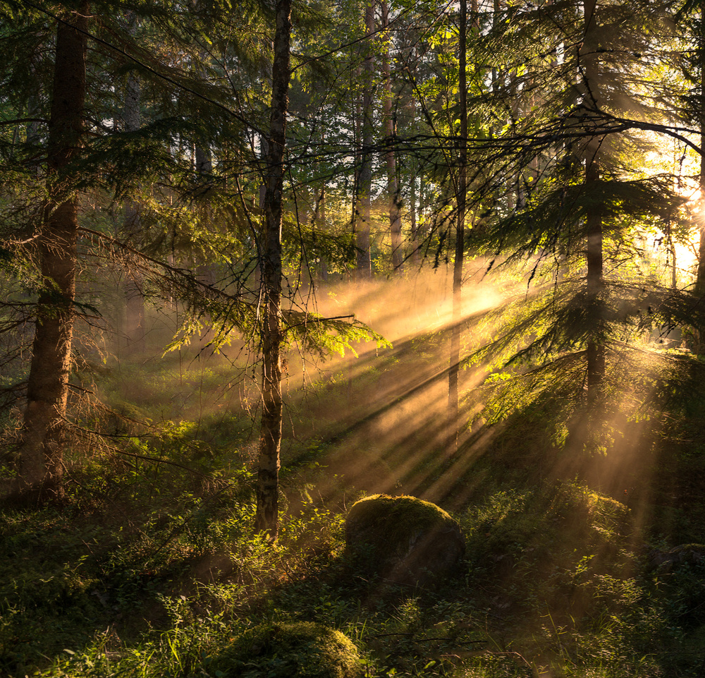 A piece of fine art art photography titled Sunrays by Christian Lindsten