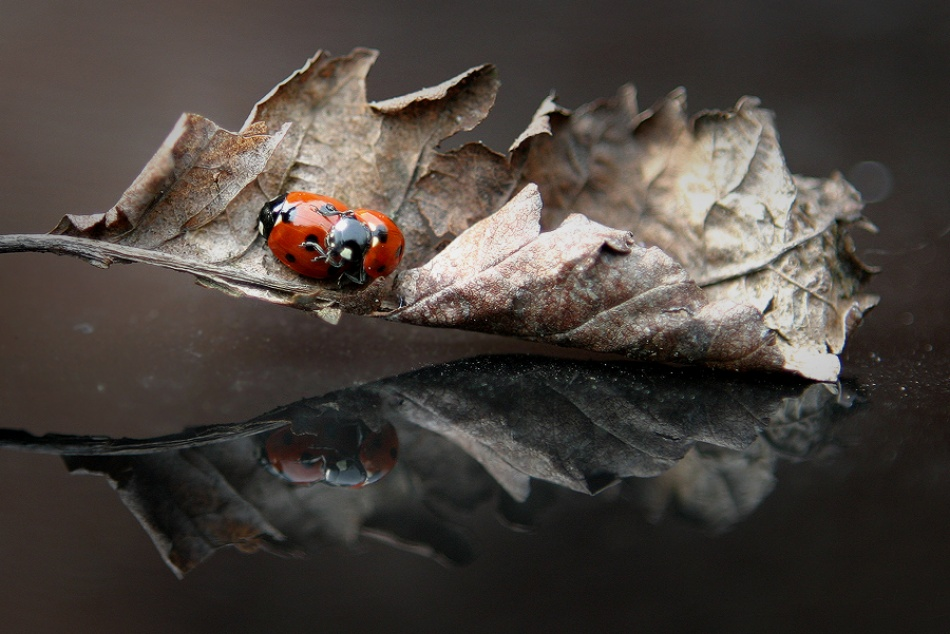 A piece of fine art art photography titled Coccinellae by Eppo