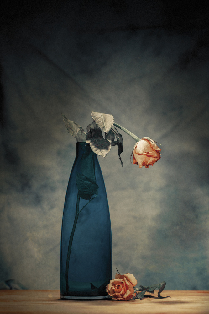 A piece of fine art art photography titled Decay - Dying Rose by Howard Ashton-Jones