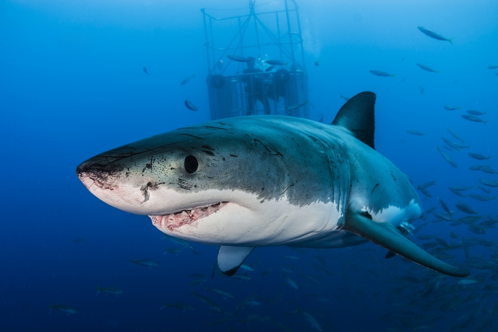 A piece of fine art art photography titled Great White by Davide Lopresti