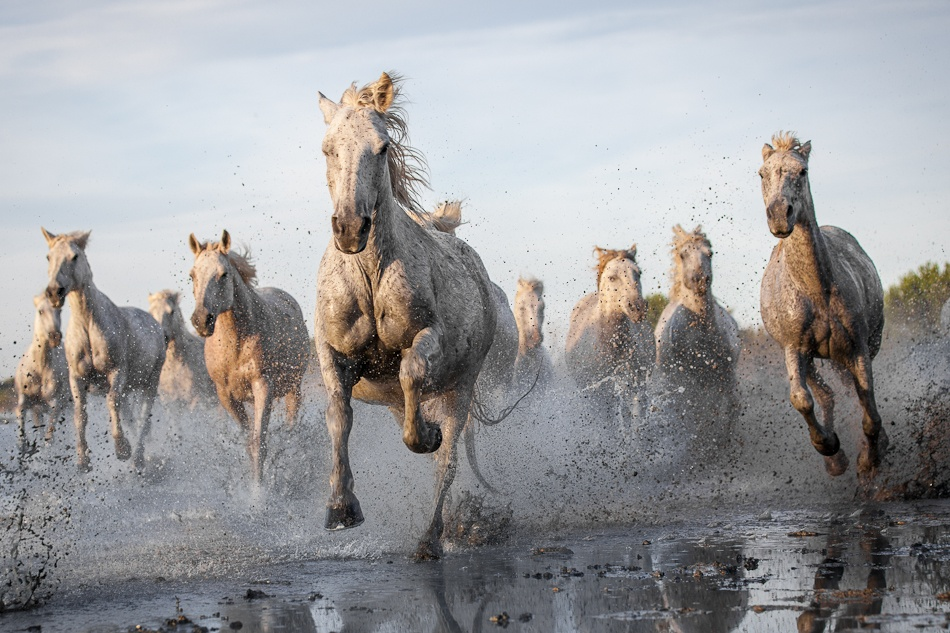 A piece of fine art art photography titled Forceful Galloping by Ruti Alon