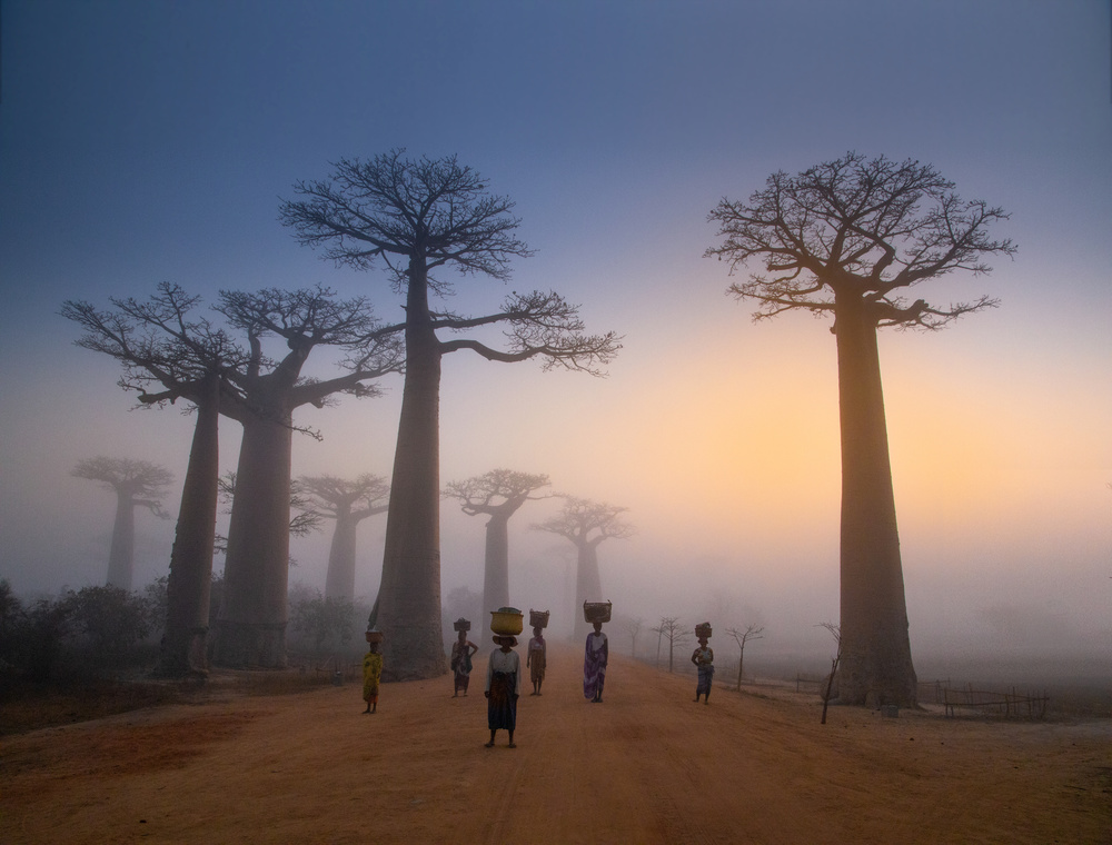 Early one Morning in Madagascar