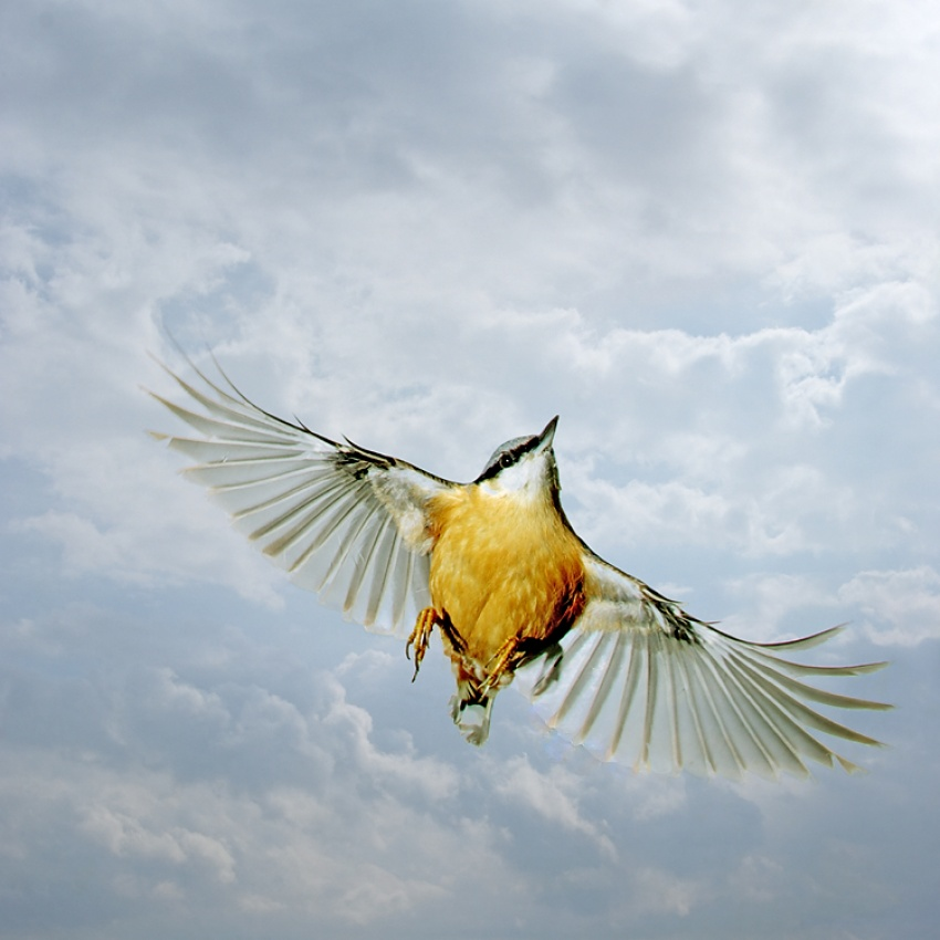 A piece of fine art art photography titled In Flight by Guido Franssens