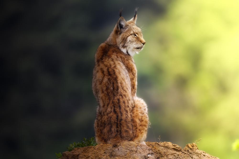 A piece of fine art art photography titled Small Great Feline by Sergio Saavedra Ruiz