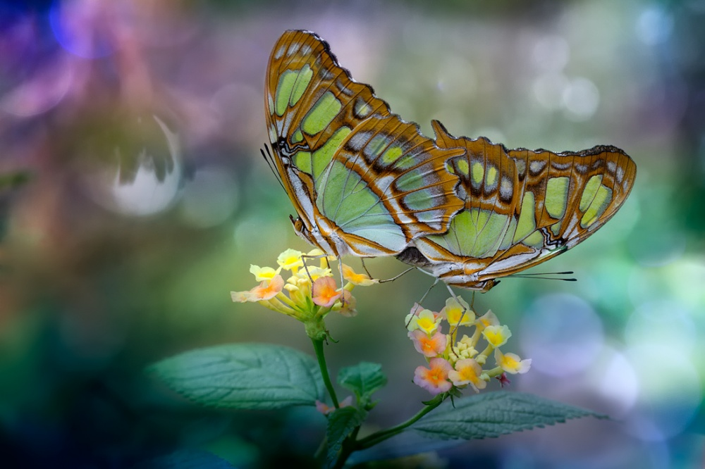 A piece of fine art art photography titled Mariposas by Carlos Barriuso