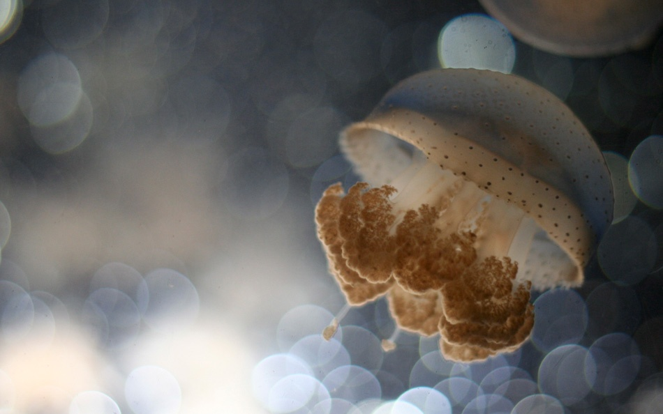 A piece of fine art art photography titled Dreaming Jellyfish by David JANSSEN