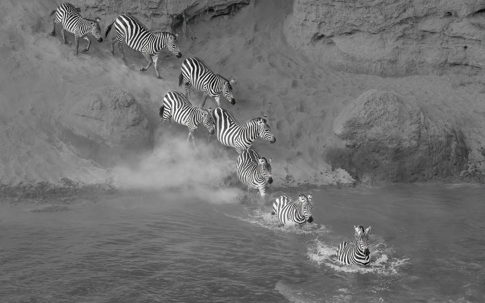 View this piece of fine art photography titled Zebra crossing the  river by Reinhard Gaemlich