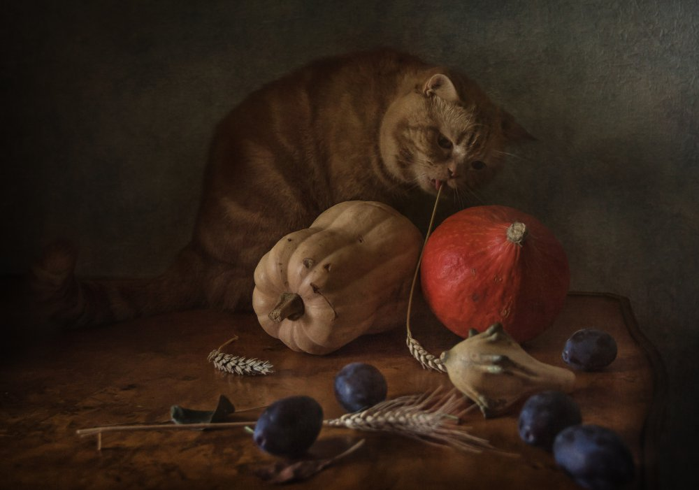 View this piece of fine art photography titled Cat and pumpkins by Brig Barkow