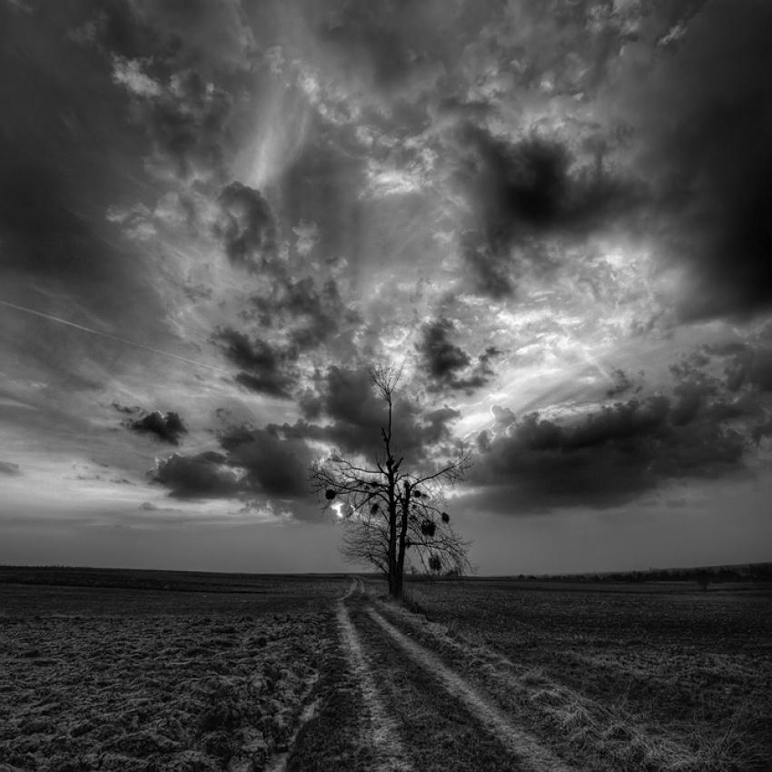 A piece of fine art art photography titled Mistletoe by Adam Holweg