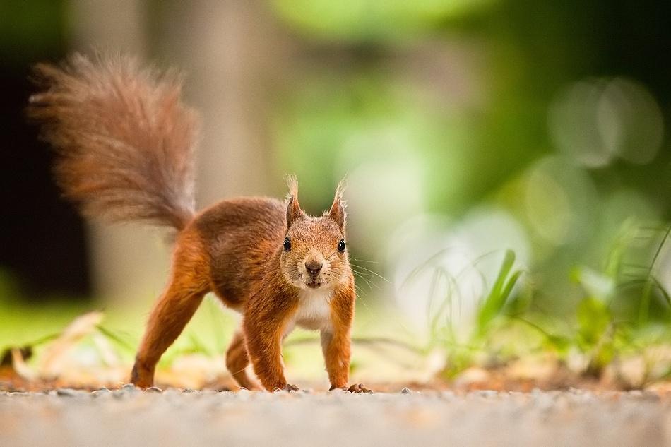 A piece of fine art art photography titled Squirrel by Robert Adamec