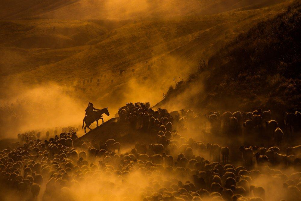 Sheep flock