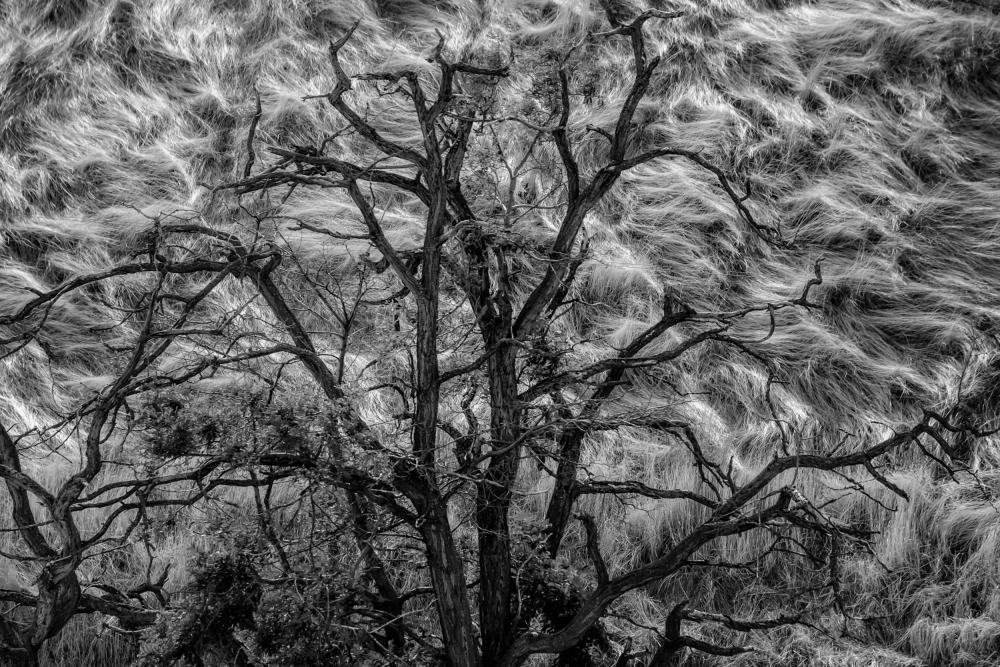 Wasco Tree