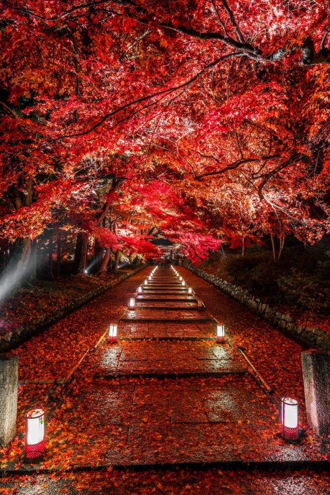A piece of fine art art photography titled Dye It Red by Takahiro Bessho