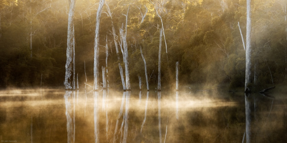 A piece of fine art art photography titled Karri Valley by Leah Kennedy