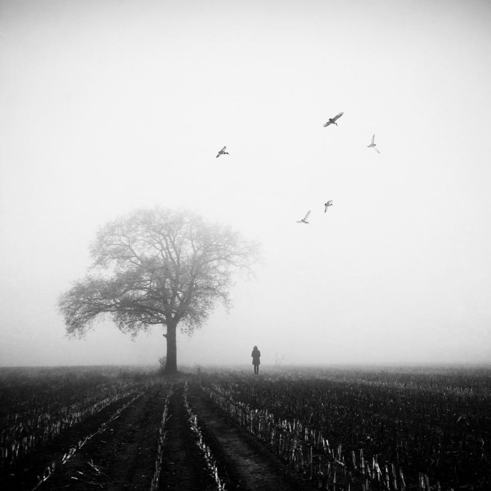 A piece of fine art art photography titled November by Manu D