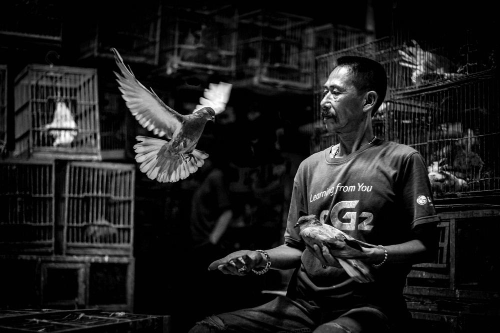A piece of fine art art photography titled Learning from You How to Fly by gunawan_markus@yahoo.com