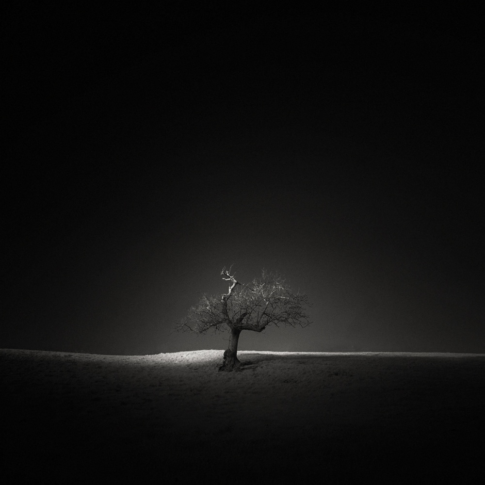 A piece of fine art art photography titled ѱ Slither by Andy Lee