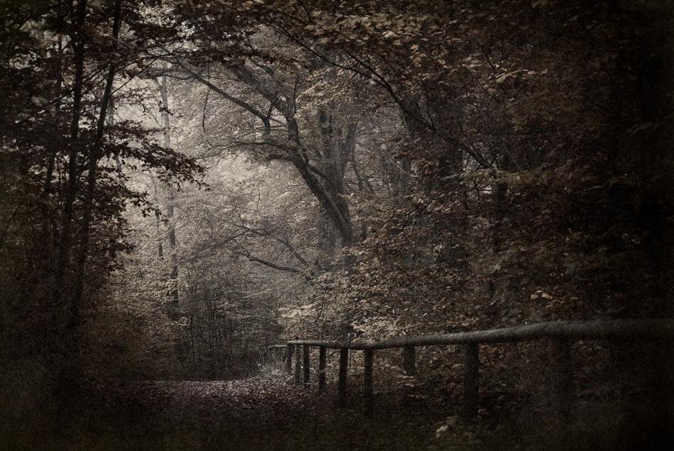 A piece of fine art art photography titled Autumn by Norbert Maier
