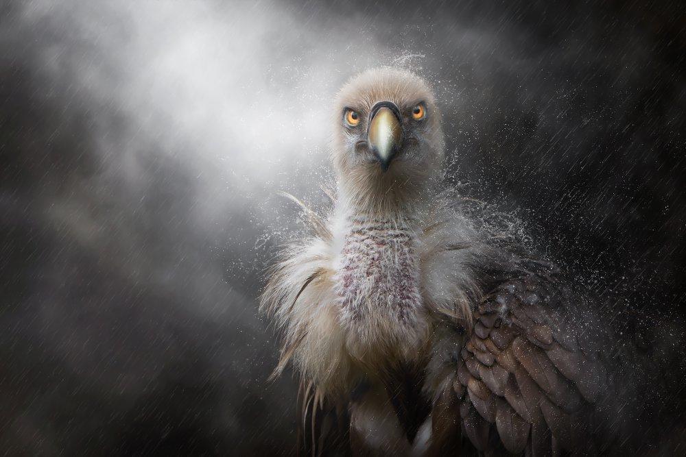 A piece of fine art art photography titled Sauwetter by Bettina Dittmann