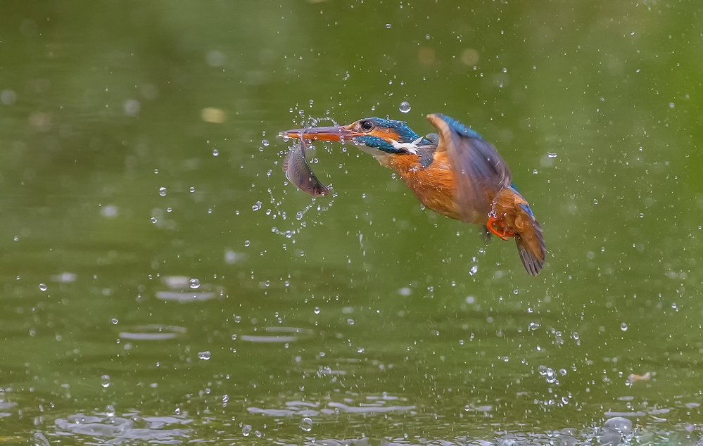A piece of fine art art photography titled Kingfisher by David Hua