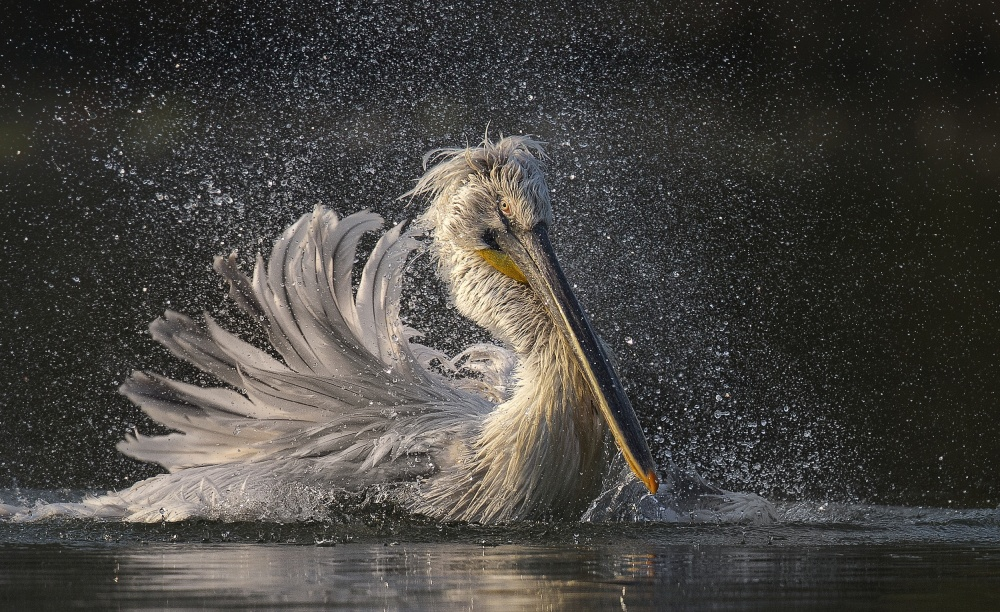 A piece of fine art art photography titled Afternoon Bath by C.S. Tjandra