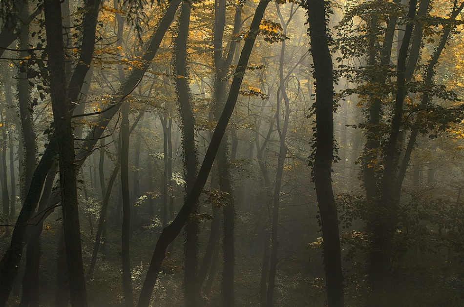 A piece of fine art art photography titled Morning Light by Norbert Maier