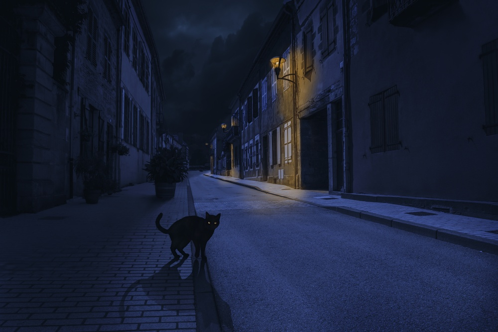 A piece of fine art art photography titled Le Chat Noir by Omar Brunt