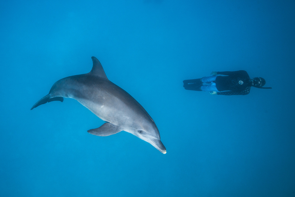 A piece of fine art art photography titled Dolphin and Freediver by Barathieu Gabriel