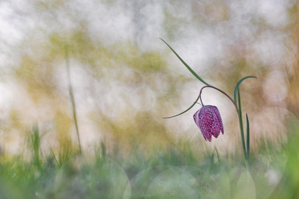 A piece of fine art art photography titled Dreaming Beauty by Henrik Spranz