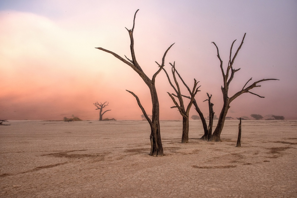 A piece of fine art art photography titled Fog In Deadvlei by Giuseppe DAmico