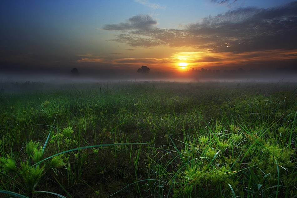 A piece of fine art art photography titled :: Mist Morning :: by Edy Santosa