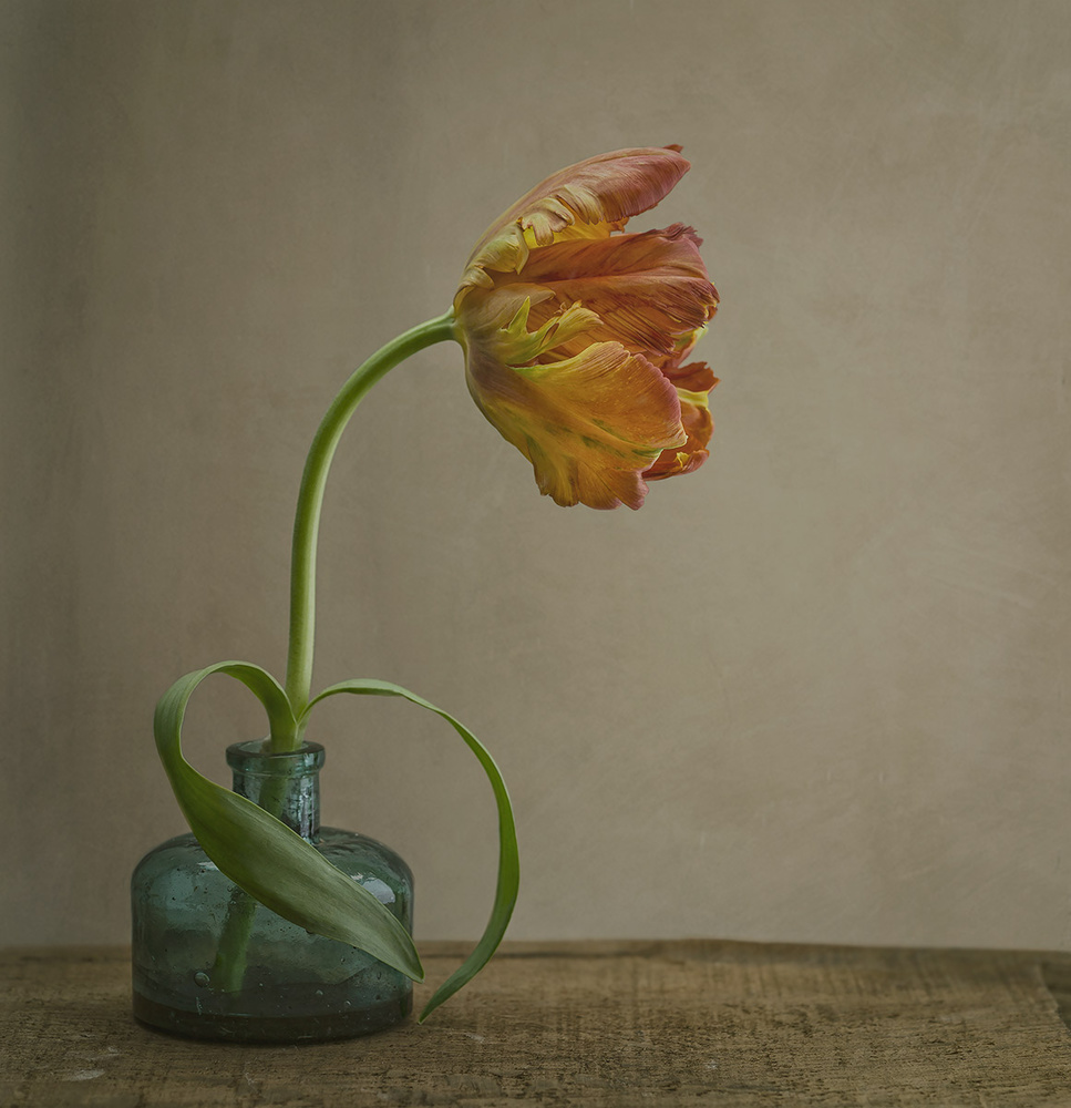 A piece of fine art art photography titled Tulip by Sarah Brooke